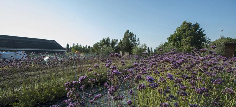 Idroflora :: Serra