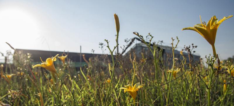 Idroflora :: la serra al tramonto